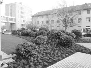 Redlichstraße